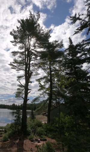 A beautiful Temagami campsite