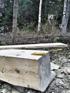 "A ""cant"", the starting point for square-cut lumber."