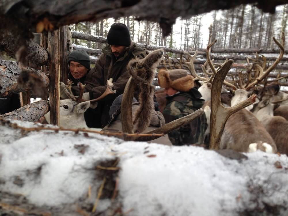Jordan with reindeer in Siberia